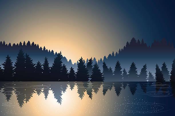 stockillustraties, clipart, cartoons en iconen met lake view and pine wood when sunrise - wildplassen