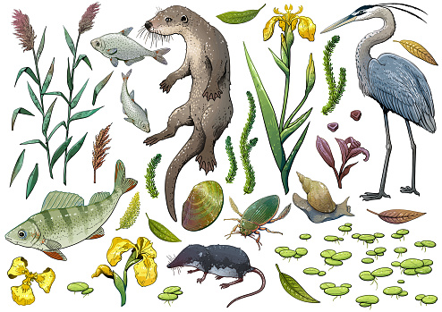 Lake wildlife collection, illustration, drawing, colorful doodle vector