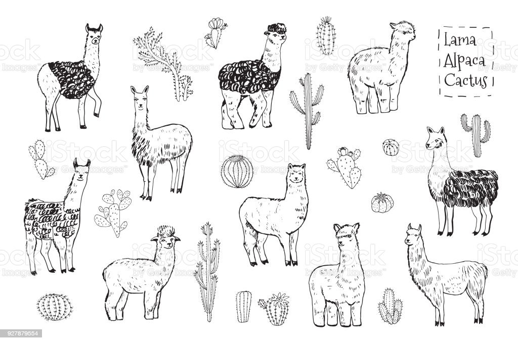 lama animal vector illustrations set vector art illustration