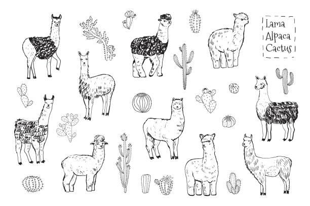 lama-tier vektor-illustrationen-set - einzelnes tier stock-grafiken, -clipart, -cartoons und -symbole
