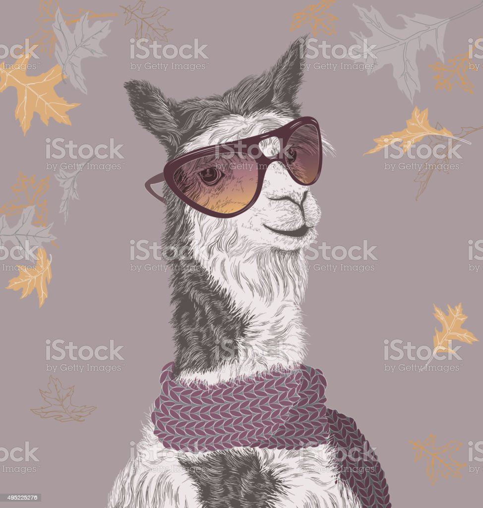 Lama on the autumn background in sunglasses and scarf vector art illustration