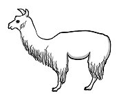 Vector sketch illustration of a llama's profile with lots of wool on its back