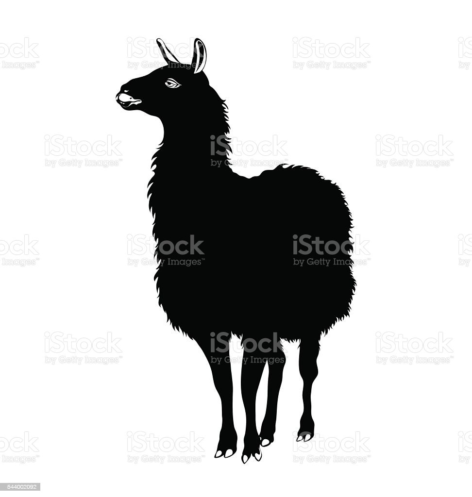 Lama vector black and white vector art illustration