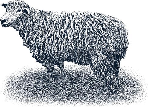 Lamb Design Element