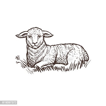 istock Lamb farm animal sketch, isolated lamb mammal on the white background. Vintage style 819397372