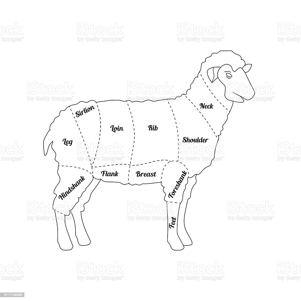 royalty free lamb shoulder clip art  vector images  u0026 illustrations