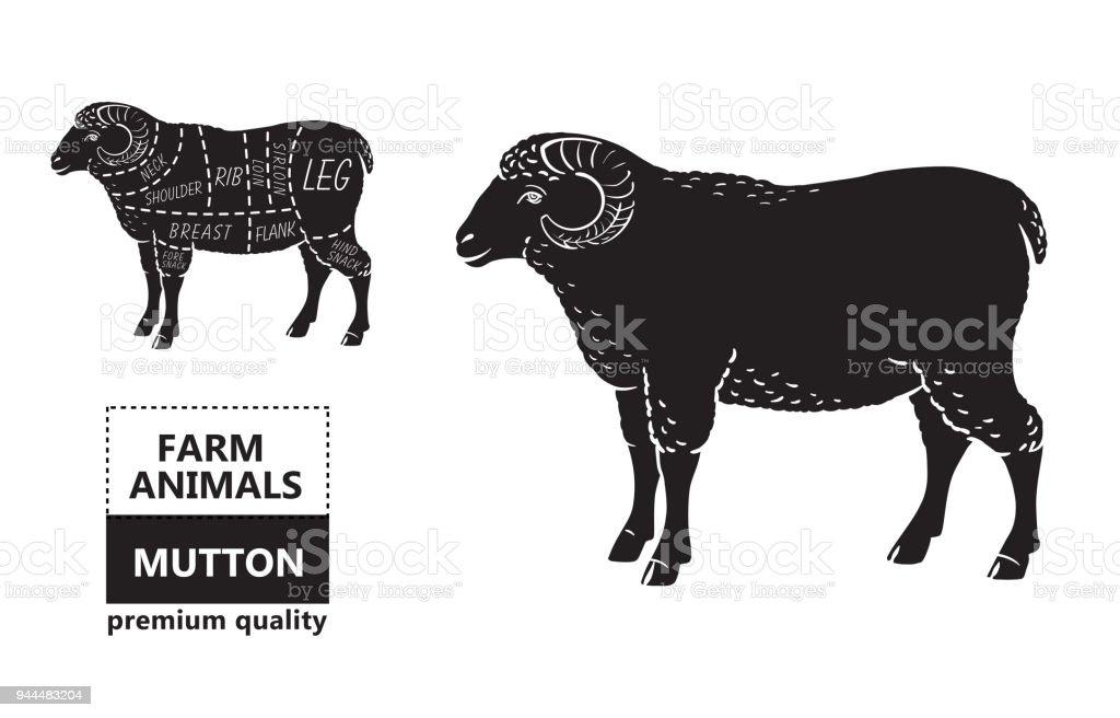 Butcher Shop Diagram Basic Guide Wiring Diagram