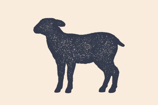 Lamb, sheep. Concept design of farm animals Lamb, sheep. Concept design of farm animals - Lamb or Sheep side view profile. Isolated black silhouette lamb or sheep on white background. Vintage retro print, poster, icon. Vector Illustration lamb animal stock illustrations