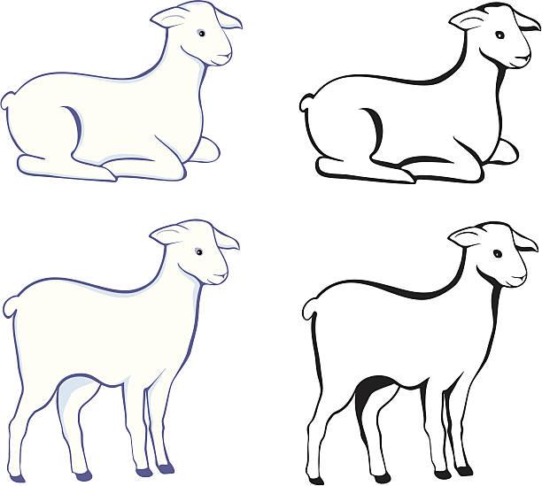 Lamm – Vektorgrafik