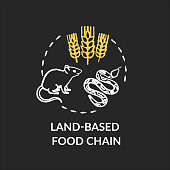 Land based food chain chalk RGB color concept icon. Energy producer and consumers. plant, herbivores and carnivores. Ecosystem idea. Vector isolated chalkboard illustration on black background