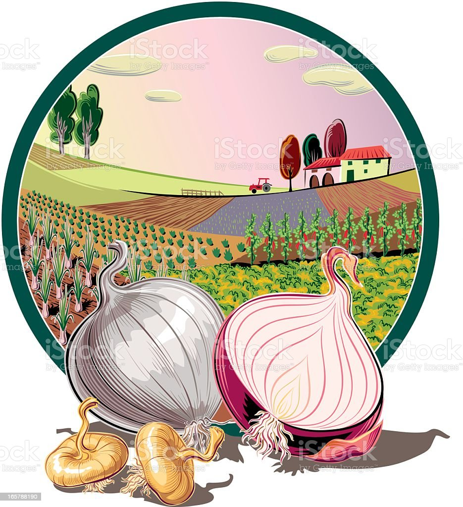 landscape in oval frame and onions vector art illustration