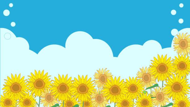 Landscape of sunflower field with blue sky vector art illustration