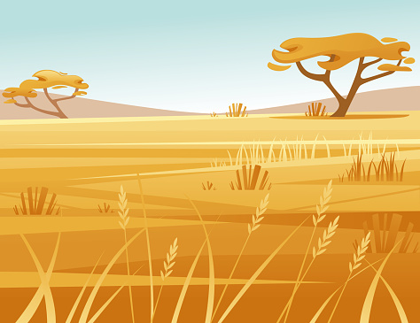 Landscape savanna background with clear sky yellow grass and tree flat vector illustration cartoon style
