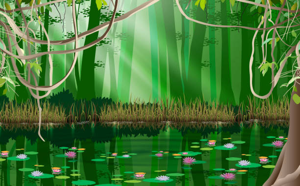 landscape lotus in the swamp in jungle macrophotography stock illustrations