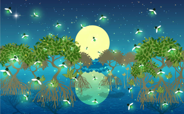landscape firefly at mangrove forest in the night dusk stock illustrations