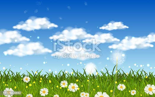 blowball dandelion and white daisy on the green grass