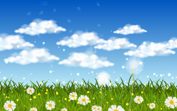 landscape blowball dandelion and white daisy on the green grass macrophotography stock illustrations