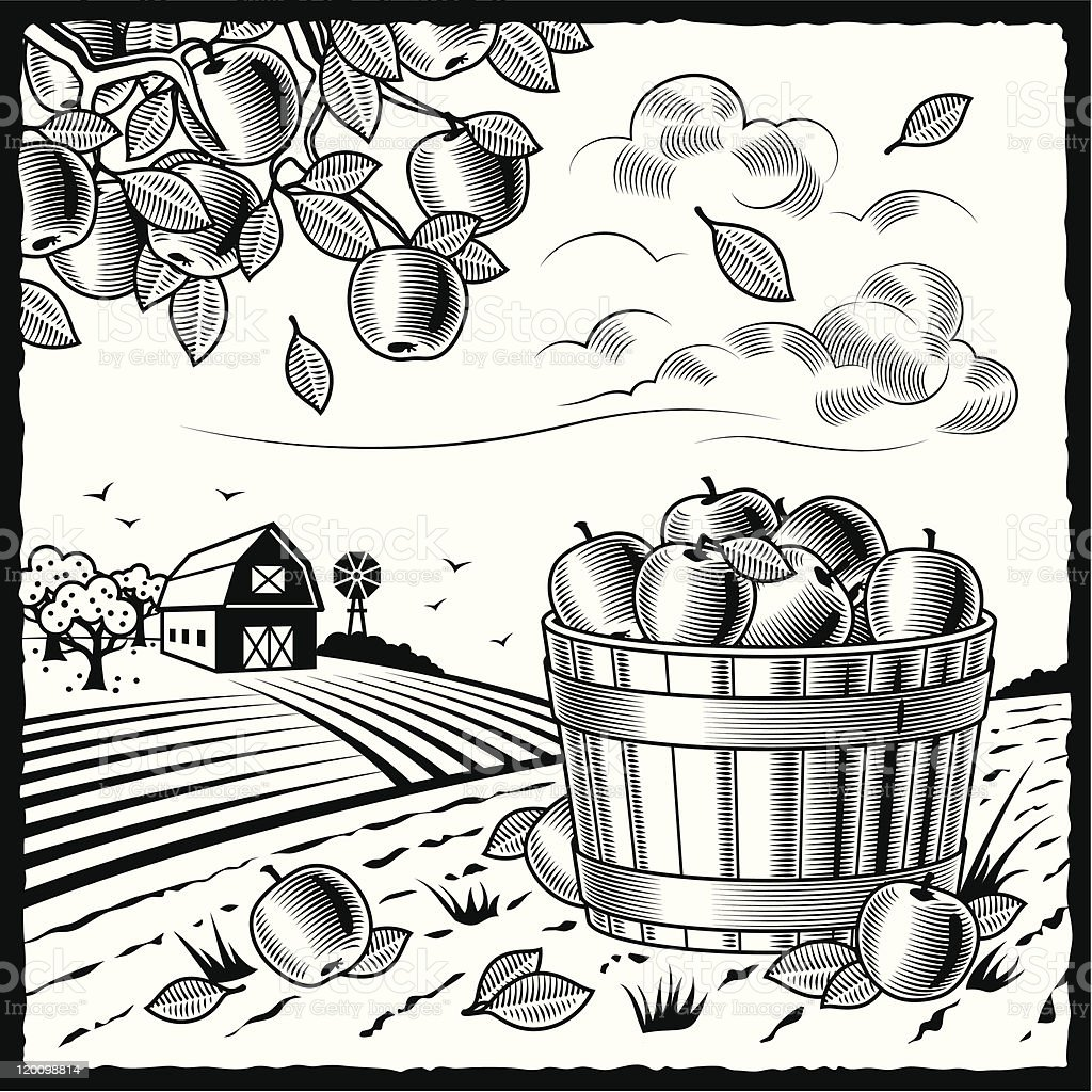 Landscape with apple harvest black and white vector art illustration