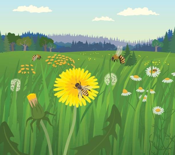illustrazioni stock, clip art, cartoni animati e icone di tendenza di landscape with bees on the flower meadow - impollinazione