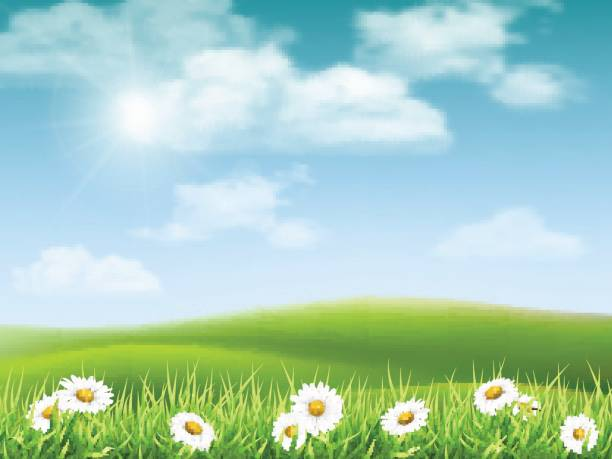 landscape with chamomile hills Rural hilly landscape with daisies in the foreground. Vector nature background. meadow stock illustrations