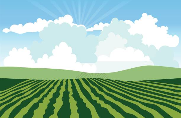 ilustrações, clipart, desenhos animados e ícones de landscape with green field - corn farm