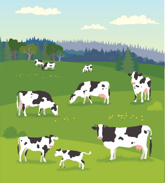 Landscape with Pasturing Cows with Baby Cows Various of cows pasturing with their baby cows on fresh green meadow domestic cattle stock illustrations