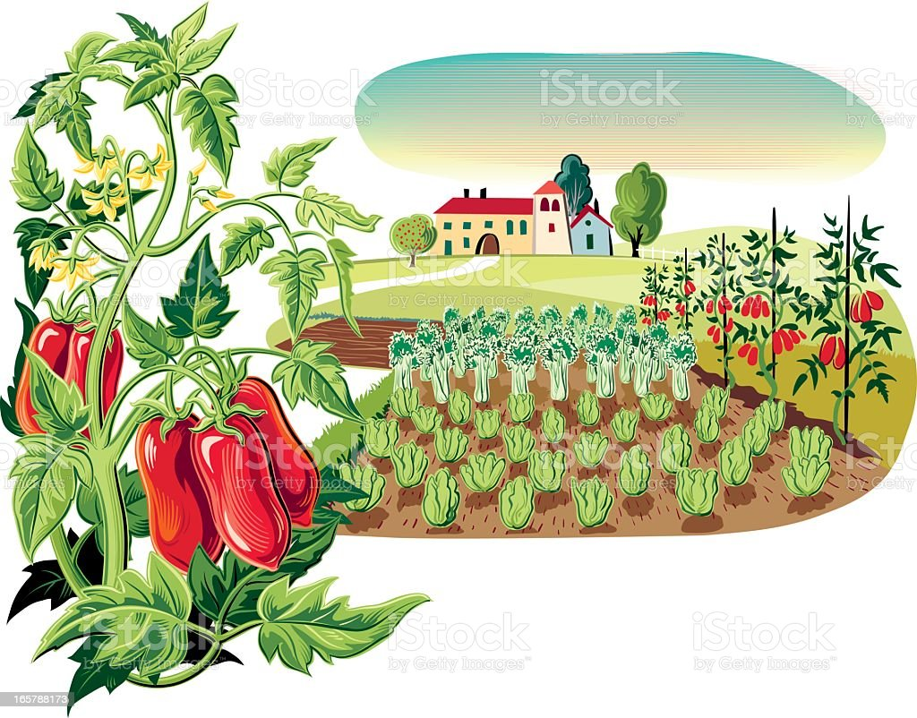 landscape with tomato plant vector art illustration