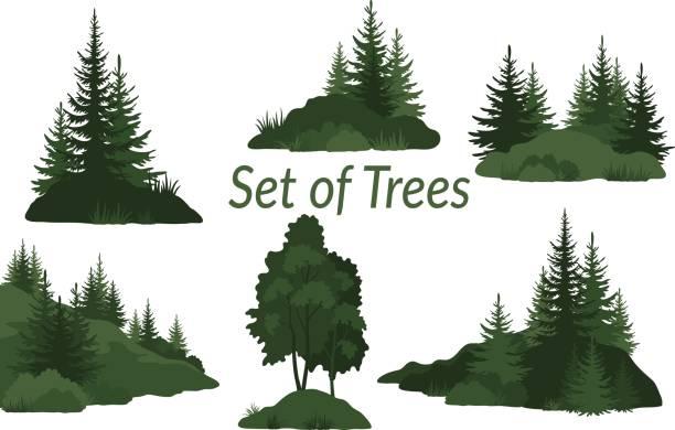 illustrazioni stock, clip art, cartoni animati e icone di tendenza di landscapes with trees silhouettes - albero sempreverde