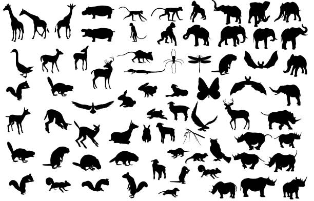 Large Animal Silhouette Collection Large animal silhouette collection containing giraffe, hippo, monkey, gorilla, elephant, rhino, deer, squirrel, bird, beaver, mouse, spider, lizard, dragon fly, duck, owl, lamb, rabbit, and bat. monkey stock illustrations