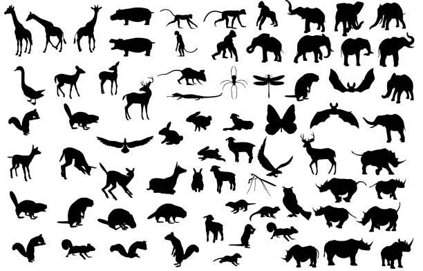Large Animal Silhouette Collection Large animal silhouette collection containing giraffe, hippo, monkey, gorilla, elephant, rhino, deer, squirrel, bird, beaver, mouse, spider, lizard, dragon fly, duck, owl, lamb, rabbit, and bat. animal stock illustrations