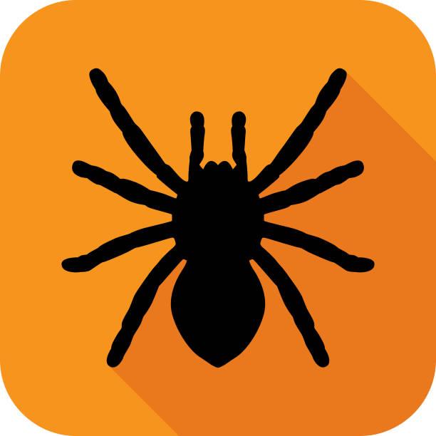 large black spider icon - tarantula stock illustrations