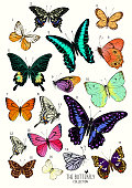 Large Collection of Butterflies, hand drawn set isolated. Vector illustration