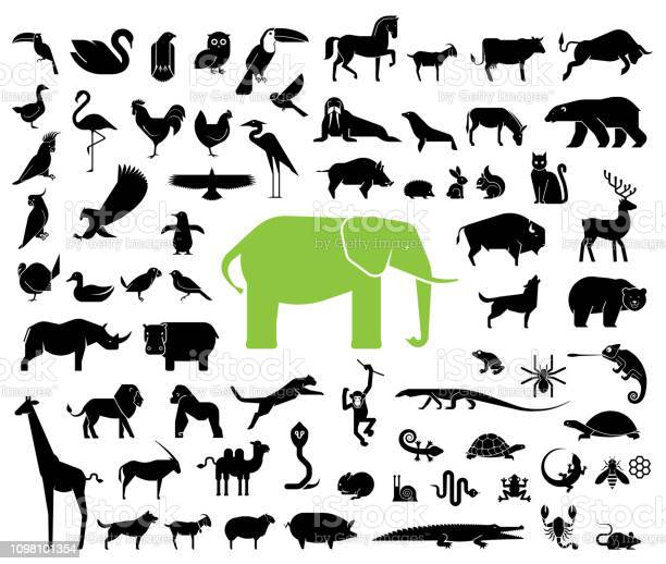Large collection of geometrically stylized land animal icons vector id1098101354?b=1&k=6&m=1098101354&s=612x612&h=ziswvg gjlesxsxl8ze mpxr0o geju20h1xkv1ozv8=