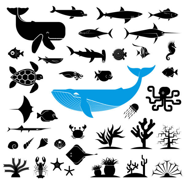 Large collection of geometrically stylized sea animal icons. Pictogram icons representing underwater world. Big fish, aquarium fish, sea weed, crustacean, seashell. Graphic design elements for print and web. marine life stock illustrations
