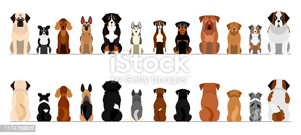 large dogs border border set, full length, front and back