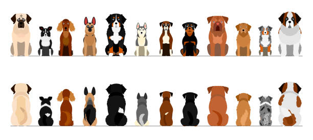 大型犬ボーダーボーダーセット、全長、前部および背部 ベクターアートイラスト