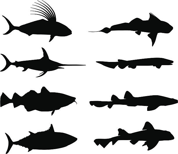 Large fish in silhouette  vertebrate stock illustrations