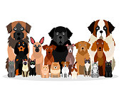 large group of various breeds dogs and cats