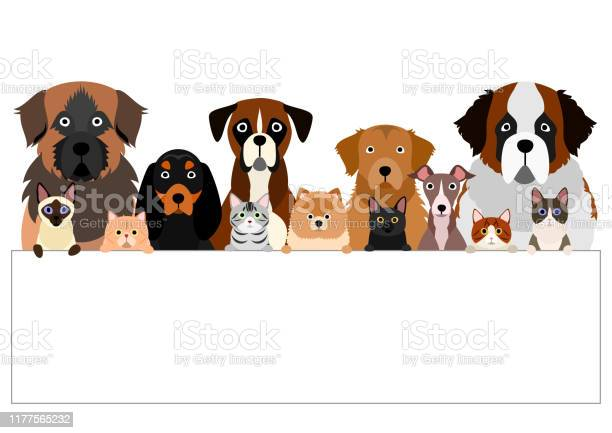 Large group of various breeds dogs and cats with white board vector id1177565232?b=1&k=6&m=1177565232&s=612x612&h=jnmxx34prwclc ckjjj9 mvss4n 1u s b2e0cvcxnq=
