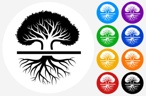 Large old oak tree. Large old oak tree.The icon is black and is placed on a round blue vector button. The button is flat white color and the background is light. The composition is simple and elegant. The vector icon is the most prominent part if this illustration. There are eight alternate button variations on the right side of the image. The alternate colors are orange, red, purple, yellow, black, green, blue and indigo. origins stock illustrations