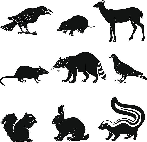large pest animals Vector illustrations of animals that are a pest in the garden, yard or city: crow, mole, deer, rat, raccoon, pigeon, squirrel, rabbit and skunk. skunk stock illustrations