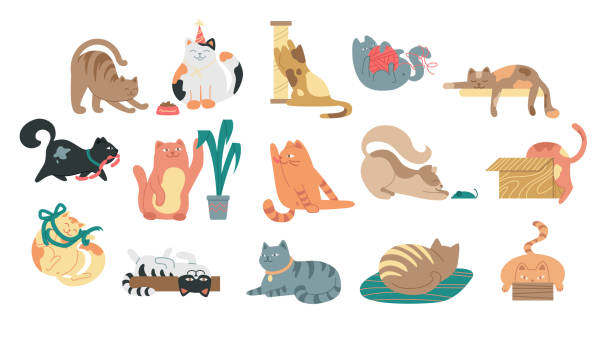 Large set of cartoon cats Large set of cartoon cats at various activities stretching, sleeping, playing, grooming and fetching yarn in a flat vector illustration on white for design elements domestic cat stock illustrations