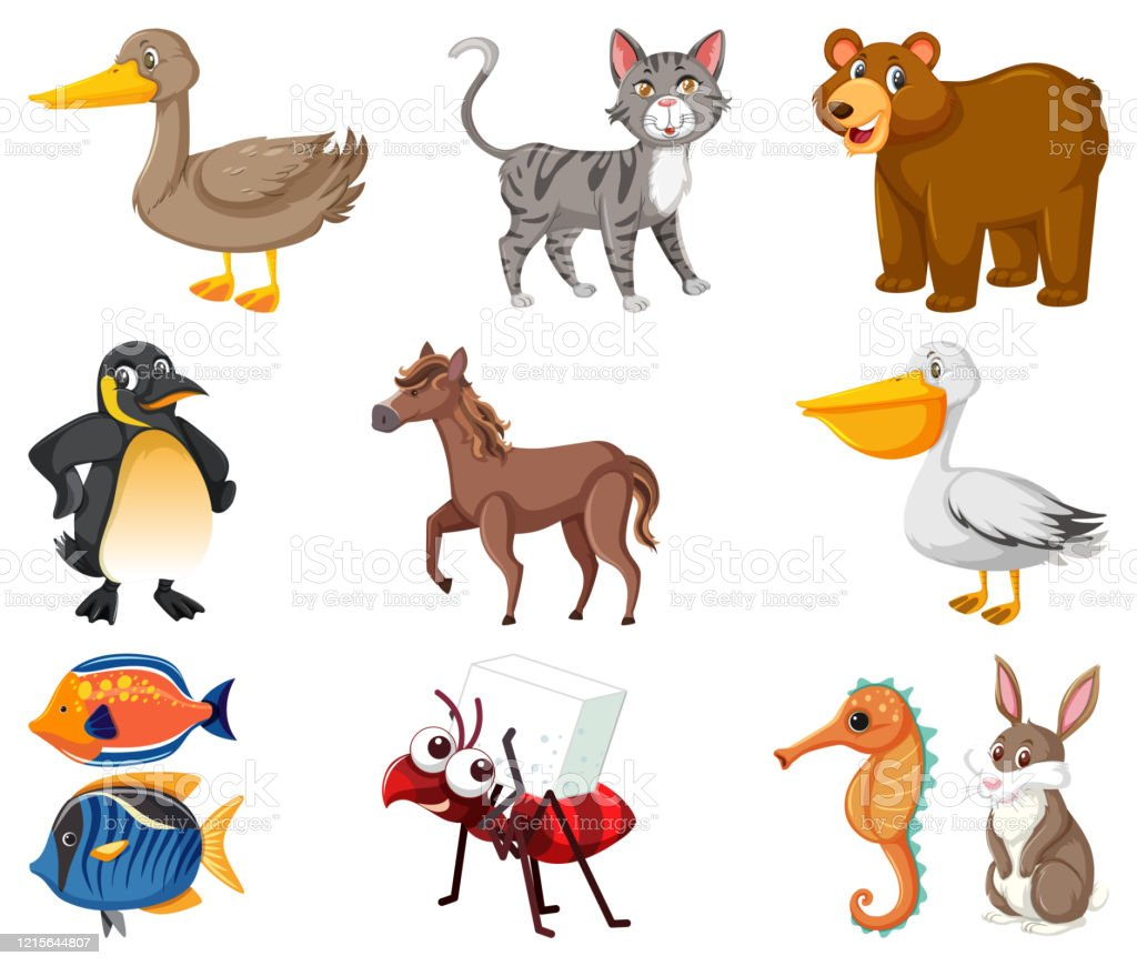 Large Set Of Different Types Of Animals On White Background Stock Illustration Download Image Now Istock