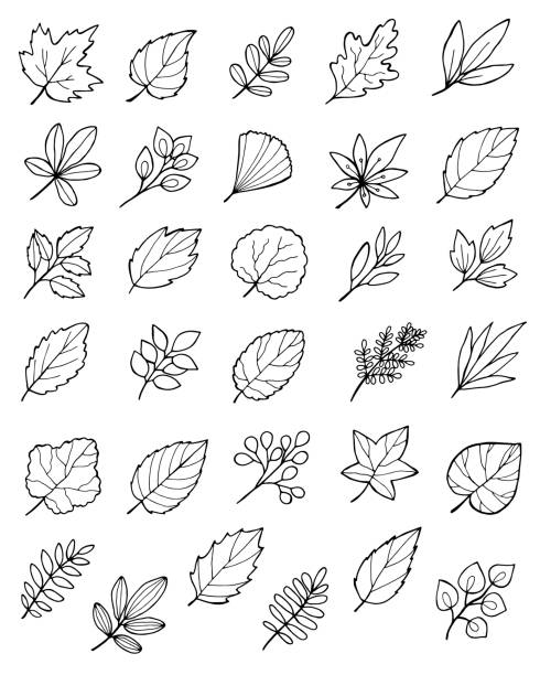 large set of hand drawn doodle autumn leaves hand drawn doodle autumn leaves set autumn drawings stock illustrations