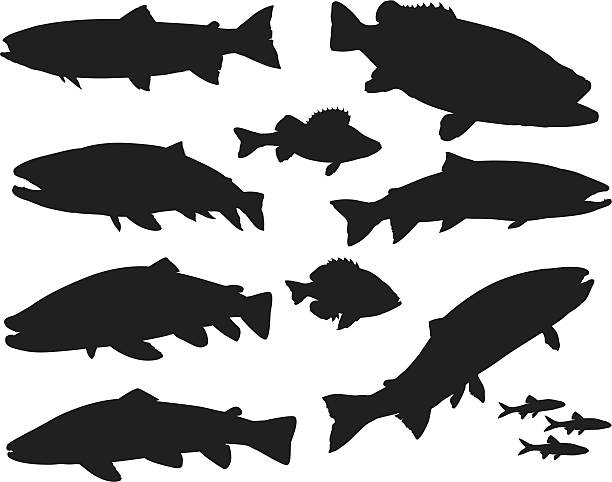 Large Sport Fish Silhouette Set vector illustration of a set of various sport fishing silhouettes. You can make your own arrangements, just like the example shown. freshwater fish stock illustrations