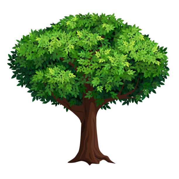 A large tree with a thick crown. A old tree with a big crown. Thick foliage. Detailed vector illustration isolated on white background. trees stock illustrations