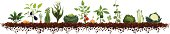 Vegetable Garden (spinach, potato, eggplant, carrot, celery, corn, cabbage, tomato, onion, pepper, radish, peas, lettuce, asparagus, cauliflower)