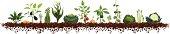 Large Vegetable Garden