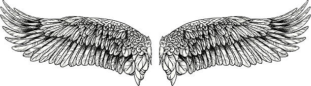 Large Wings vector art illustration
