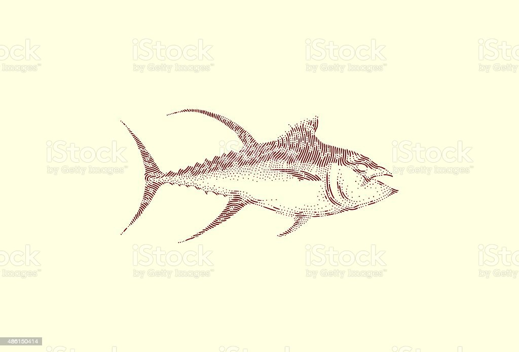 Large yellowfin tuna vector art illustration